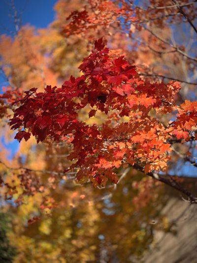 """Autumn Portal"""