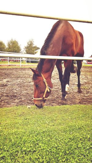 Horse Czech Republic Vigvam Resort