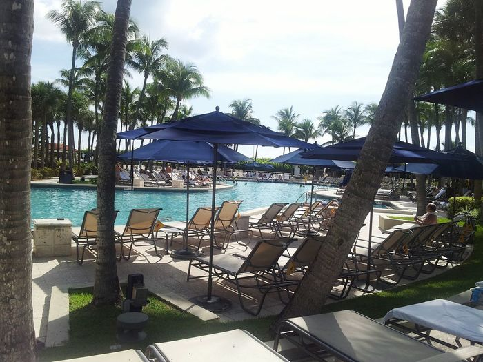 Last day! Beautiful View Palm Trees Swimming Pool Fort Lauderdale  Phone Photography Paradise Thursday Island Thursday Afternoon