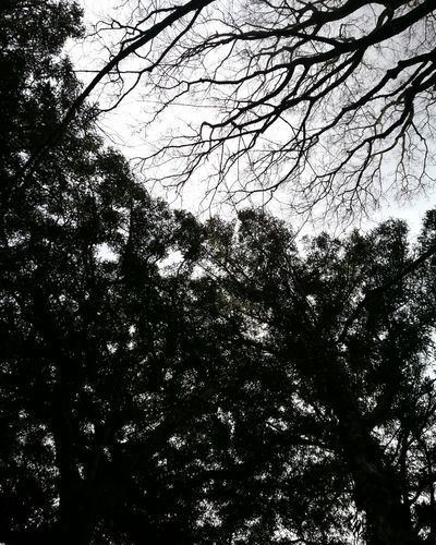 Low Angle View Full Frame Tree Nature Growth Outdoors First Eyeem Photo Leica Huawei P9 Journey Leica Black And White Travel Leicacamera JEJU ISLAND  Bijarim 비자림 제주도 Forest Forest Photography Beauty In Nature