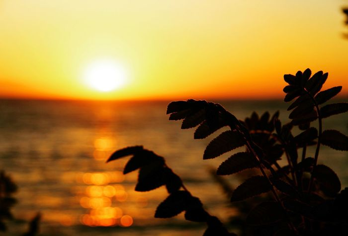 Sunset Sun Scenics Beauty In Nature Water Tranquil Scene Idyllic Orange Color Sea Tranquility Silhouette Horizon Over Water Leaf Nature Growth Majestic Focus On Foreground Atmospheric Mood Sky Plant