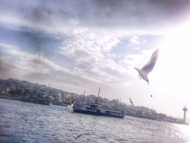 Simit Istanbul Istanbul #bogaz Martı