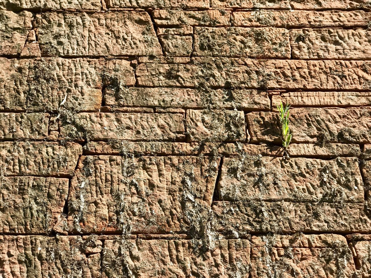 brick wall, textured, built structure, day, no people, outdoors, rough, animals in the wild, architecture, one animal, close-up, building exterior, animal themes, nature