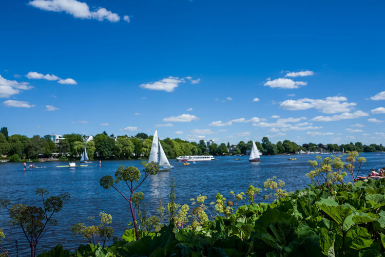 Hamburg Alster area Beauty In Nature Blue Cloud - Sky Day Flower Flowering Plant Growth Leaf Nature No People Outdoors Plant Plant Part Scenics - Nature Sea Sky Tranquil Scene Tranquility Tree Water