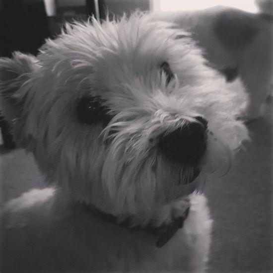 Dog Dog Love Dog❤ Dog Lover Dog Of The Day Doglovers