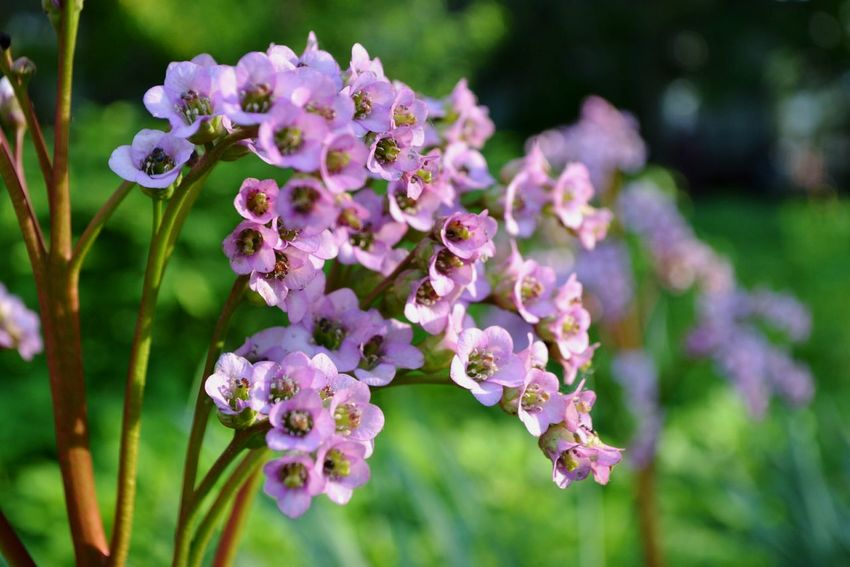 Flower Nature Purple Freshness Beauty In Nature Flower Head Fragility Plant Growth Day Outdoors Close-up No People Pollination