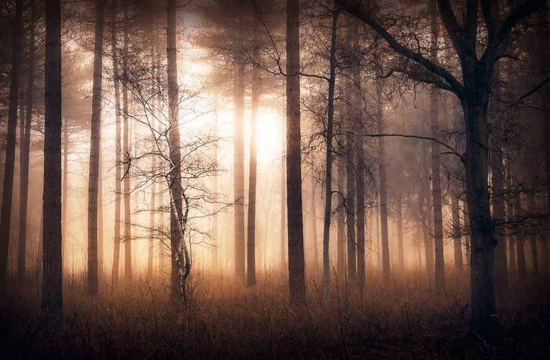 Foggy in the forest at sunrise Atmosphere Atmospheric Mood Beauty In Nature Day Fog Forest Growth Landscape Mist Nature Non-urban Scene Outdoors Scenics Serenity Silhouette Sun Sunrise Sunset Tranquil Scene Tranquility Tree Tree Trunk