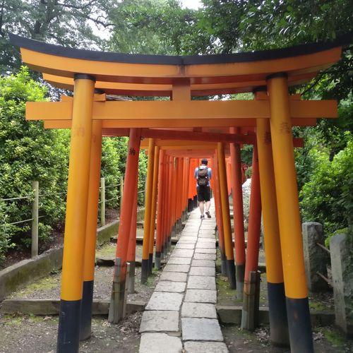 Torii (gateway) of Shinto shrine (Nezu Shirine) in Tokyo, Japan. Gateway Gateway Shinto Shrine Japan Japanese Culture Nezu Shrine Place Of Worship Religion Shinto Shrine Shinto Shrine Archway Shrine Of Japan Tokyo,Japan TORII First Eyeem Photo