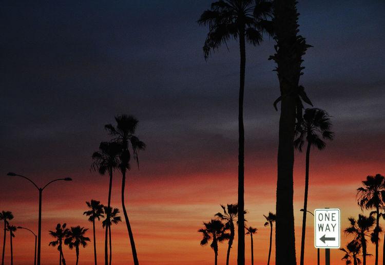 Sunset scene at Balboa Pier, Newport Beach, Calif. Balboa Pier Beach Newport Beach One Way Sign Palm Trees Sunset Sunset Silhouettes
