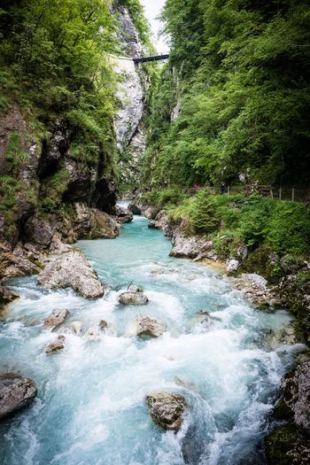 Tolmin Nature Tolmin Gorges Slovenia Water Tree Plant Nature Beauty In Nature Scenics - Nature Day Forest Outdoors Rock Flowing Water