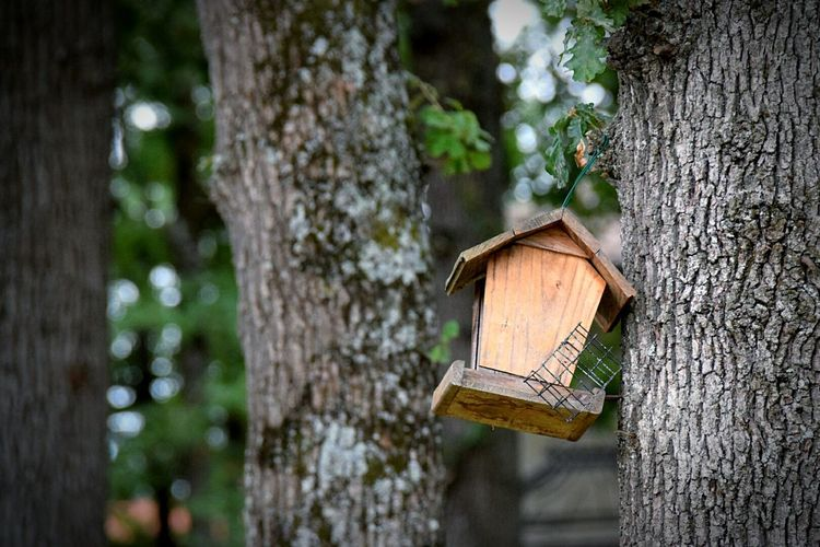 Tree Trees Tree Trunk Tree_collection  Beauty In Nature Outdoors Birdhouse Beautiful Beautiful Nature Taking Photos Taking Pictures Relaxing Enjoying Life