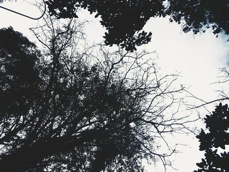 Sky Trees VSCO Vscofilter Vscot2 Vscosky Vscogood Vscogreat Vscoperfect Vscoalltheway Vscocool Vscophilippines Sonydscw830 Vscocam Vscocamph VscoCamPHF Vscophilippines 🌳