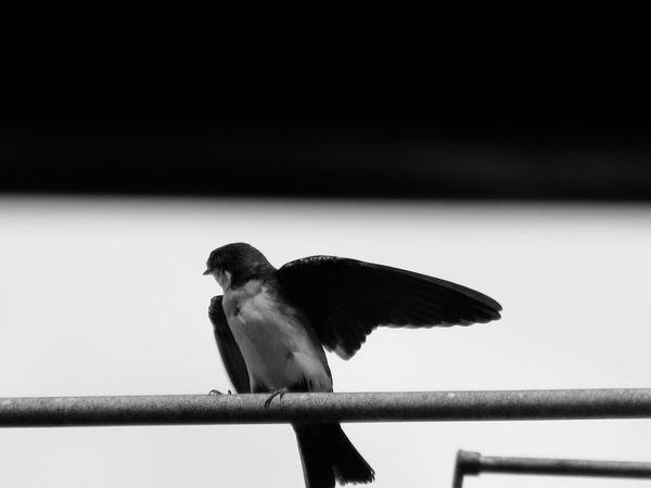 one #ByMe #Brazil #blackandwhite #photography Bird Perching Close-up Tropical Bird