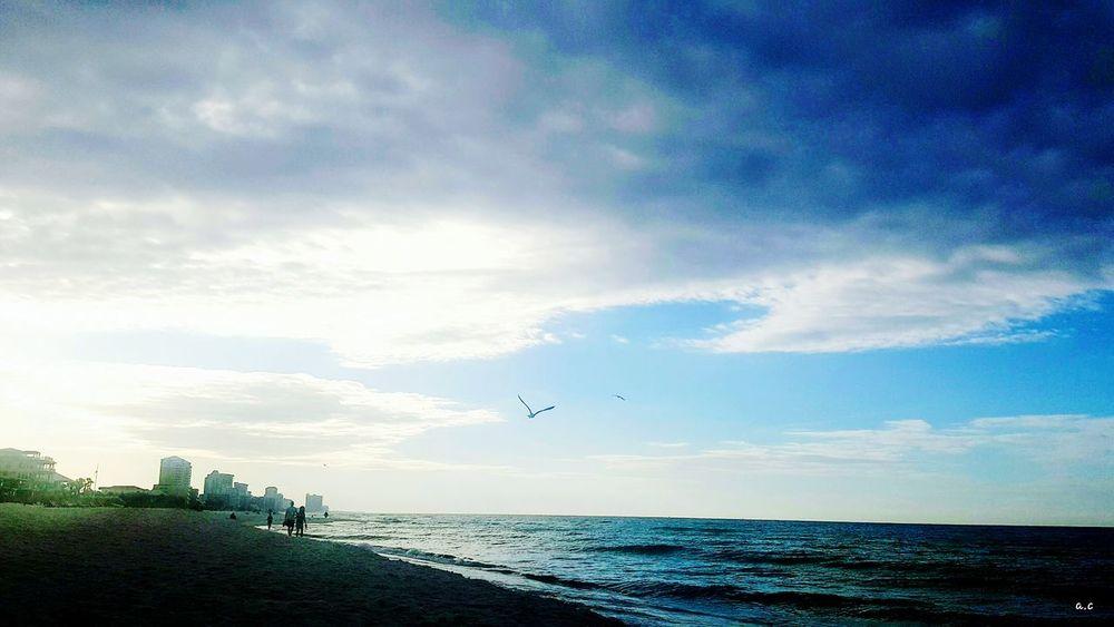 Cloud - Sky Sea Bird Flying High Beach