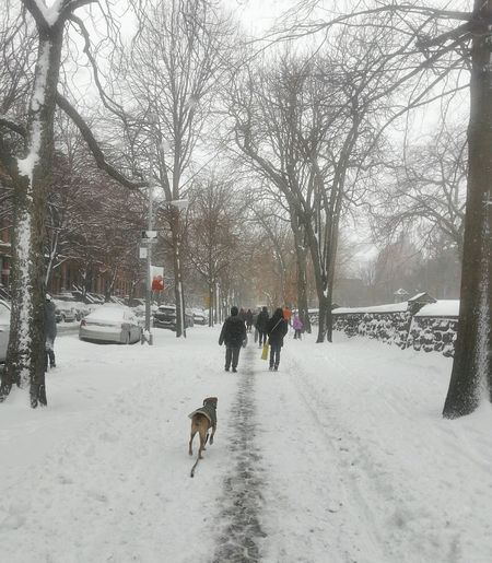 This is a picture of the recent snow storm in NYC. Wasn't as bad as advertised. IPSWinter