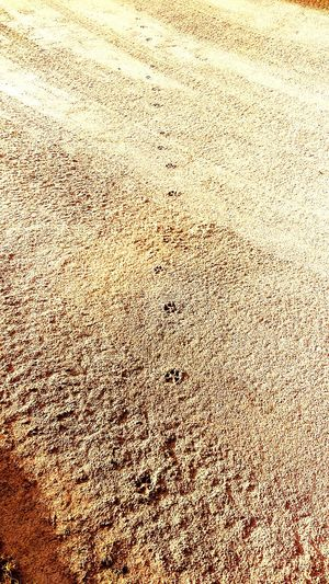 Bobcat tracks. Bobcats! Bobcat Animal Themes Animal_collection