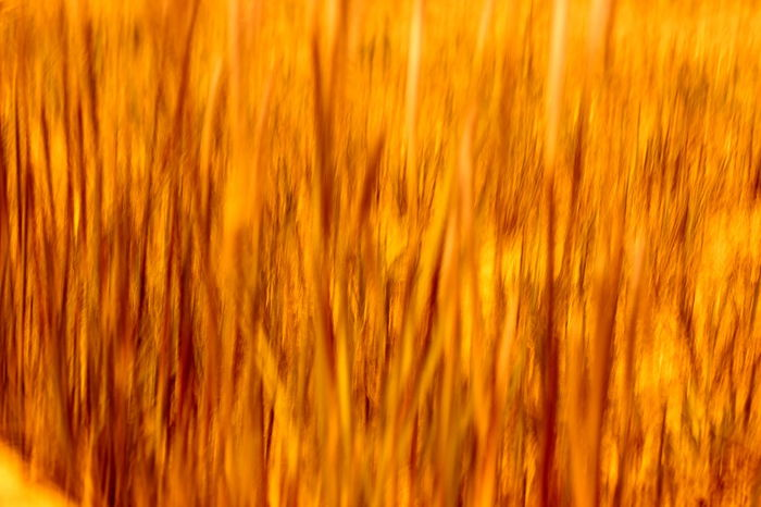43 Golden Moments Abstract Beauty In Nature EyeEm EyeEm Best Shots Eyeem Philippines Grass Growth Moving Moving Capture Movingshot Nature Night Orange Color Outdoors Fine Art Photography Pivotal Ideas