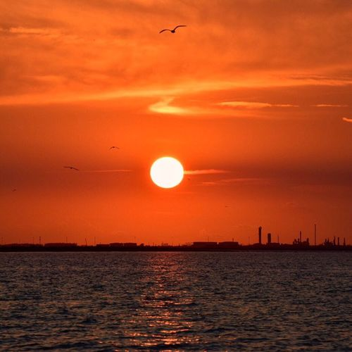 Sunset Bird Flying Water Sun Tranquil Scene Tranquility Orange Color Beauty In Nature Nature Sky Sea Travel Destinations Gulf Coast Texas Galveston Port Galveston Bay Galveston, TX GalvestonTexas Vacations Seascape Reflection Horizon Over Water Gulfcoast Texas Sunset