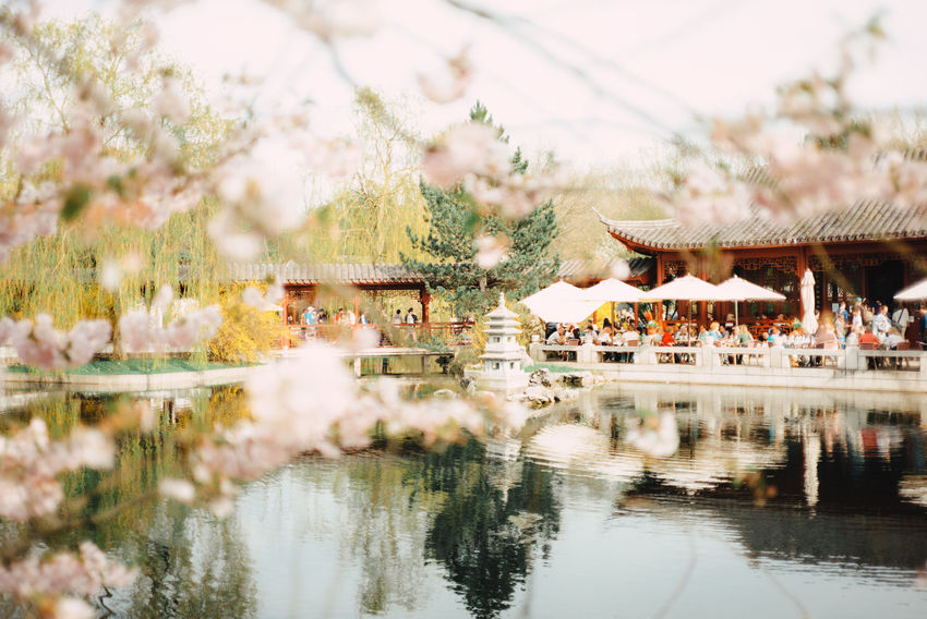 Kirschblütenfest Asian  Asian Culture Cherry Blossoms Architecture Belief Bridge Building Building Exterior Built Structure Cherry Blossom Cherryblossom Day Lake Nature No People Outdoors Place Of Worship Plant Reflection Selective Focus Travel Destinations Tree Water Waterfront