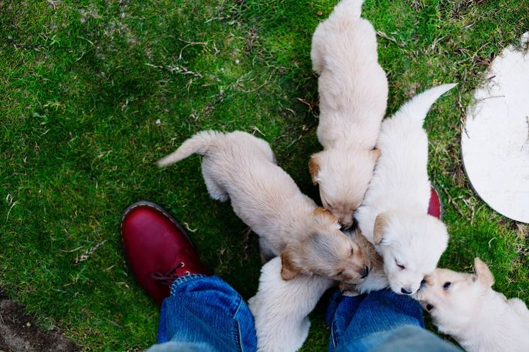 Low Section Of Man Standing By Puppies On Grass