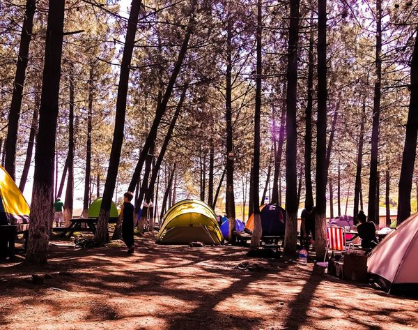 Camping ⛺️ IPhoneography Mobilephotography Nature Photography Sun Summer Wood Tree Tent Camping Nature Sunlight Beauty In Nature Forest Outdoors