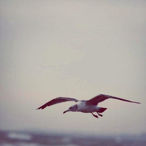 カモメ☆〜(ゝ。∂) Seagulls 千里浜