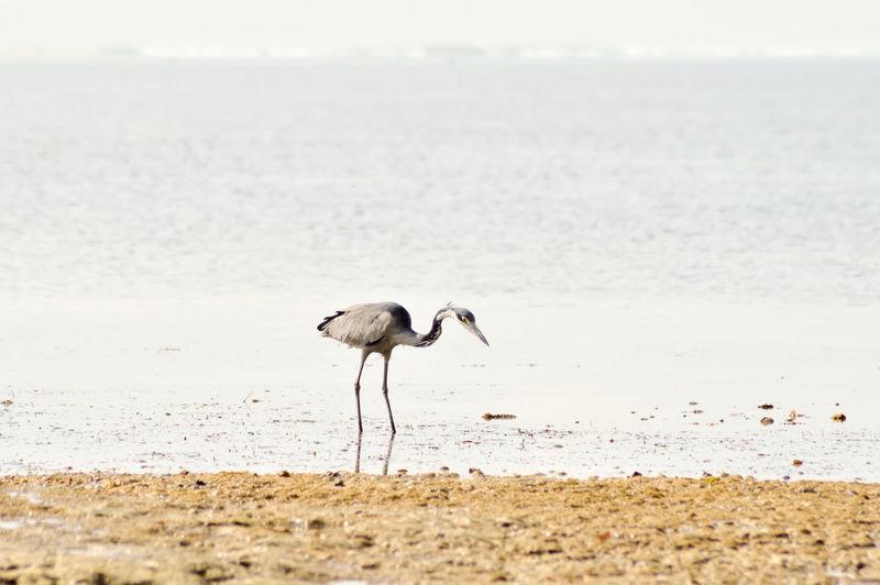 Bird on beach by sea