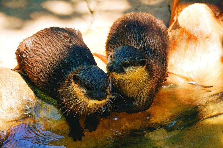Cute Animal Animal Planet Otters Animal Themes Animal Close-up No People Group Of Animals Animal Body Part Animals In The Wild Mammal Animal Wildlife Brown Outdoors Day