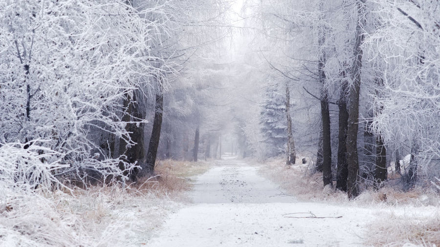 EyeEmNewHere Cold Temperature Day Fog Forest Landscape Nature No People Outdoors Snow Snowing Tree Winter