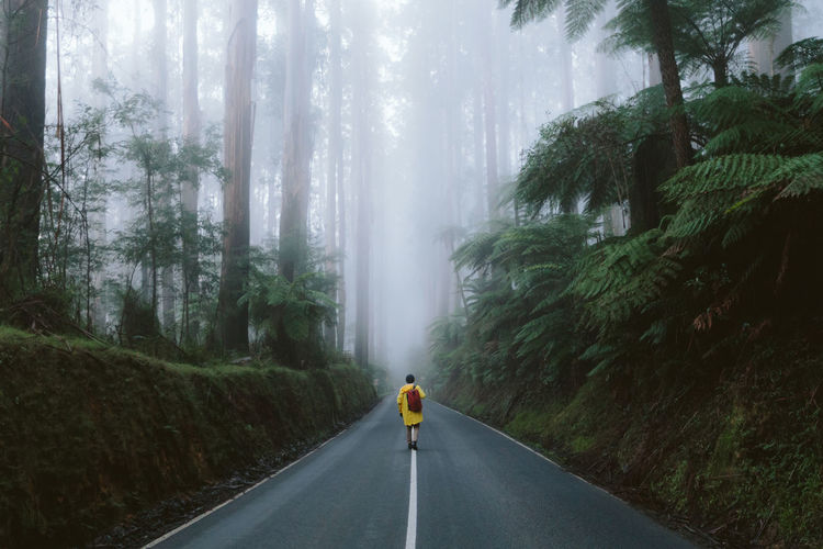 Rear View Of Traveler Walking On Road In Foggy Forest