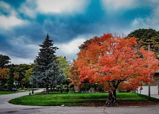 Colors Colorful Composition Autumn Colors Autumn Fall Fall Colors Landscape_photography Landscape Canada Toronto Streetphotography Photography Photographer Photography Lovers Urban Landscape