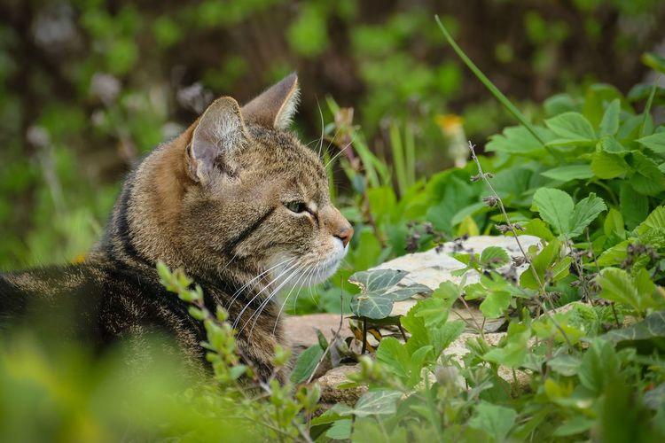 Hauskatze Animal Themes Animals In The Wild Close-up Day Garten Getiegerte Katze Kater Mammal Nature No People One Animal Outdoors
