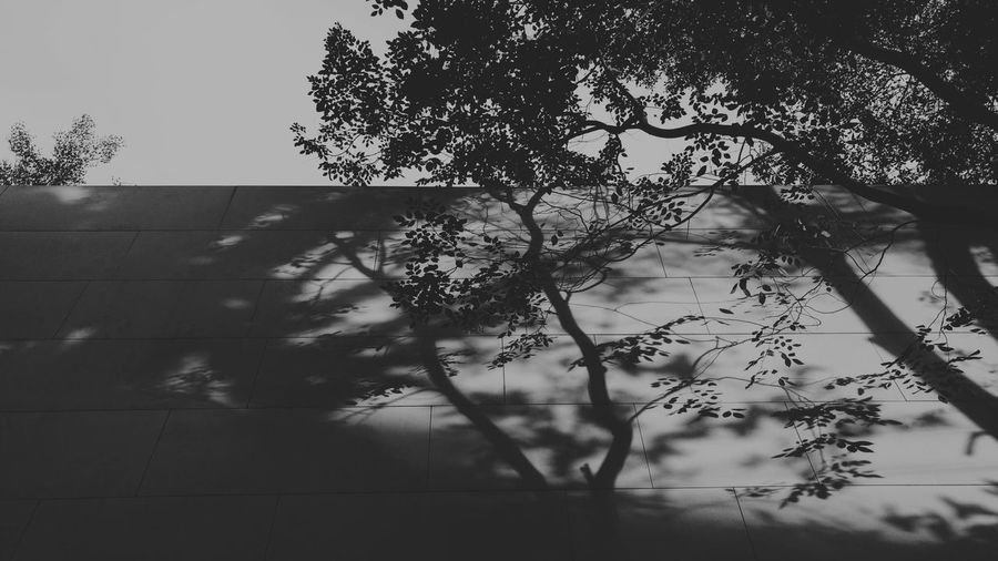 Tree Light And Shadow No People Branch Outdoors Day Shades Of Nature Shadeonwall Architecture Building Stone Wall Thailand