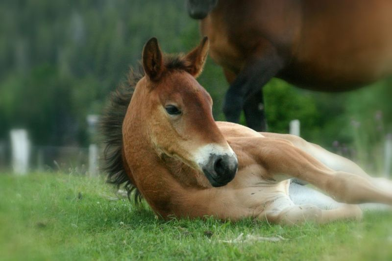 Foals Horse Horses Nature Outdoors Animal Cute