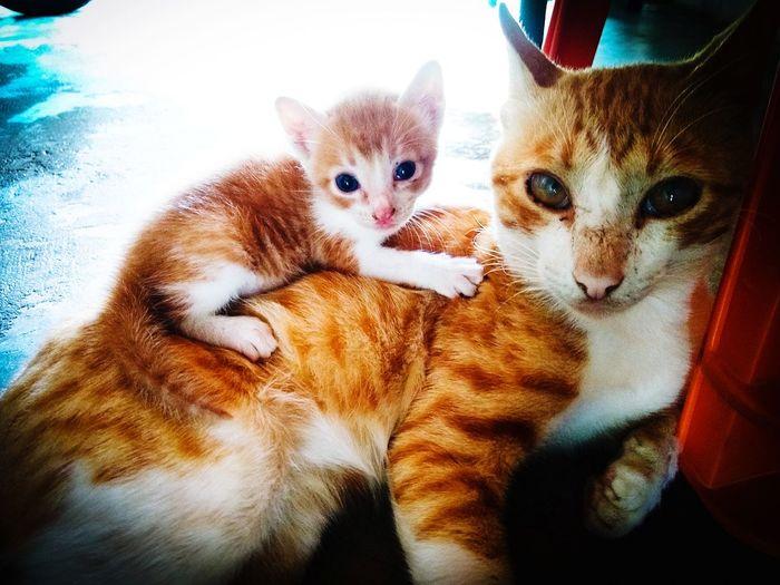 family cats...