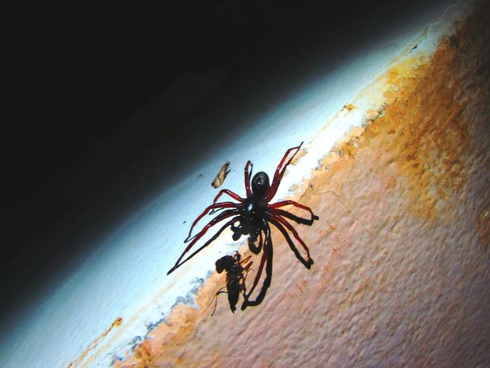 Spider Macro Spider Naturelovers