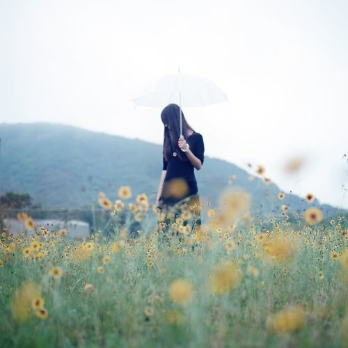 Woman With Umbrella At Flower Field