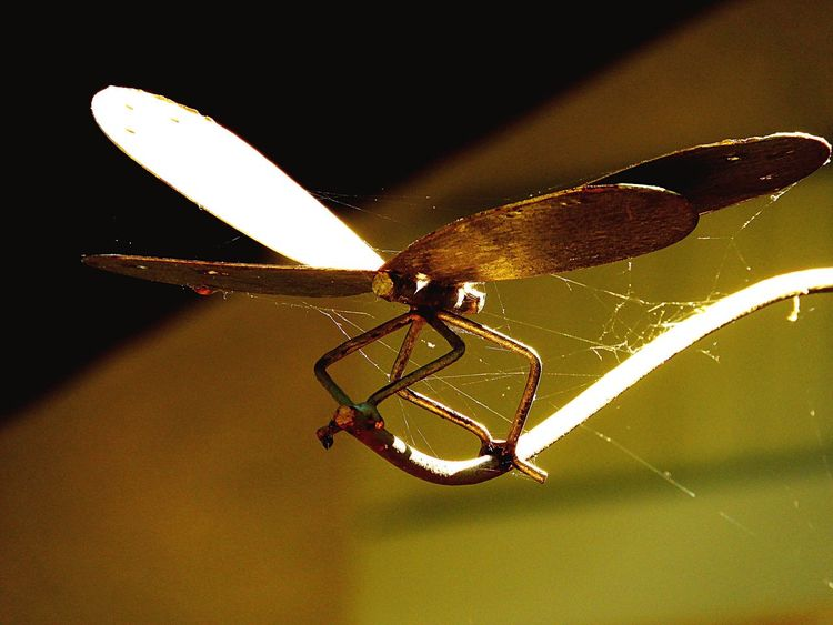 Golden Dragonfly Insect Animal Themes One Animal No People Close-up Outdoors Day