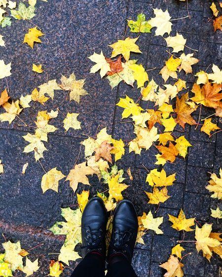 Autumn Shoe One