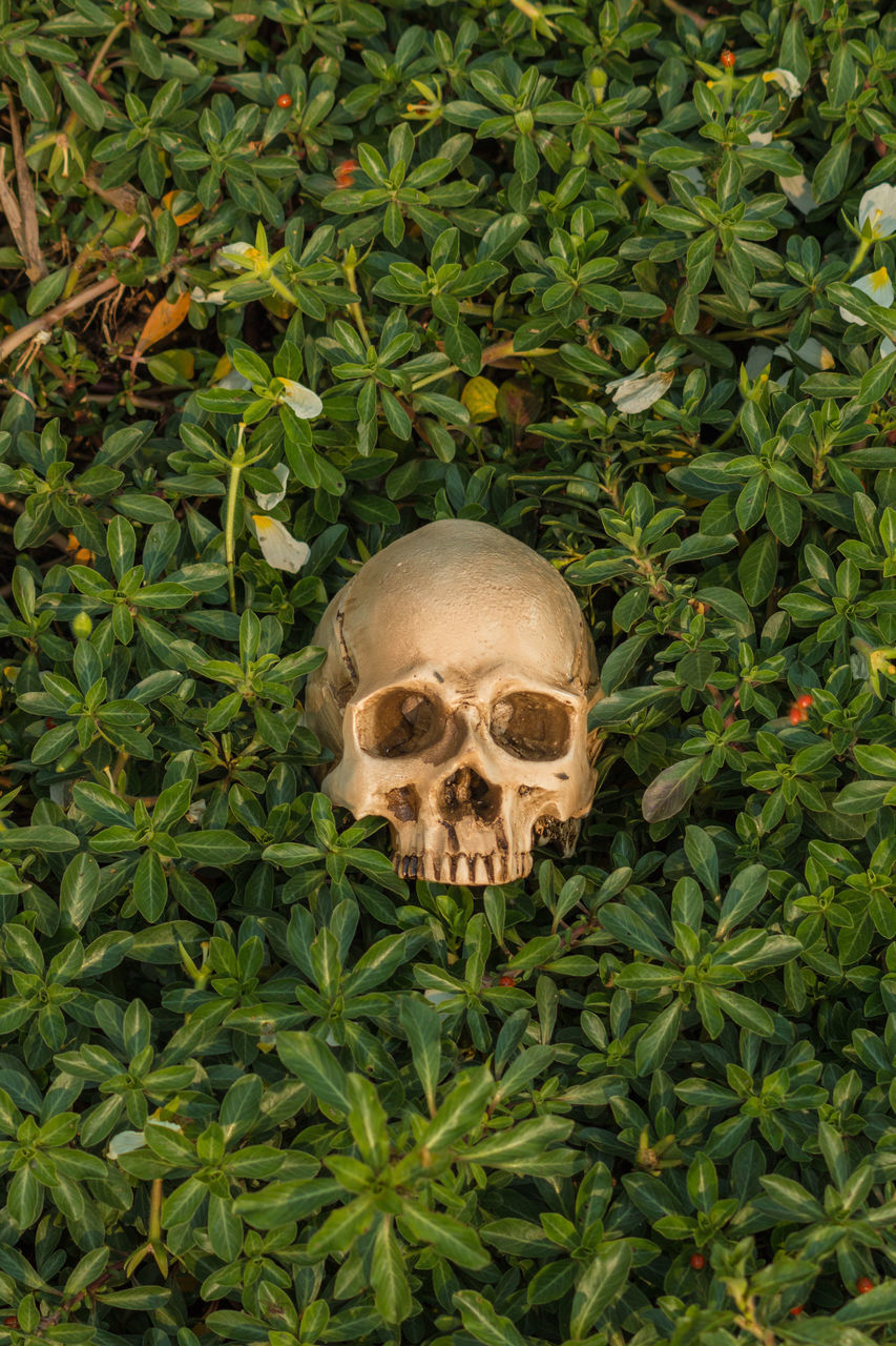 Directly Above Shot Of Human Skull Amidst Plants On Field