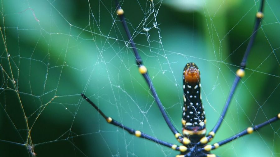 Insect Spider Spider Web Web Nature Focus On Foreground Beauty In Nature No People Outdoors Insect Close-up Sony Ilce 5000