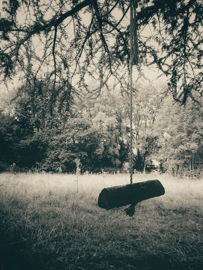 Spooky Abandoned Rope Swing // Summer Views Taking Photos Popular Photos EyeEmBestPics Abandoned Places Abandoned Shades Of Grey Light Spooky Fun
