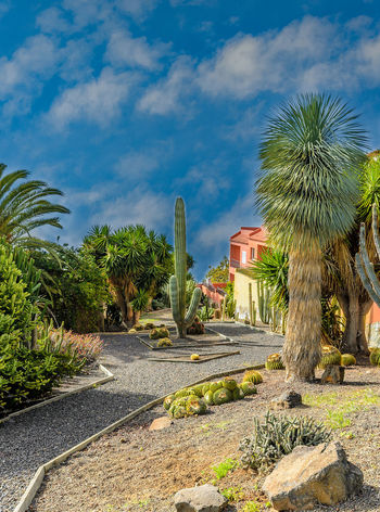 El Sauzal. Pictures from a small village in the north of Tenerife. Canary Islands Feliz-Photo Landscape_Collection Path SPAIN Architecture Built Structure Day El Sauzal Foto Fotografia Fotografie Fotography History Landmark Landscape_photography Landscapes Nature No People Outdoors Palm Tree Sky Tenerife Teneriffa Tree