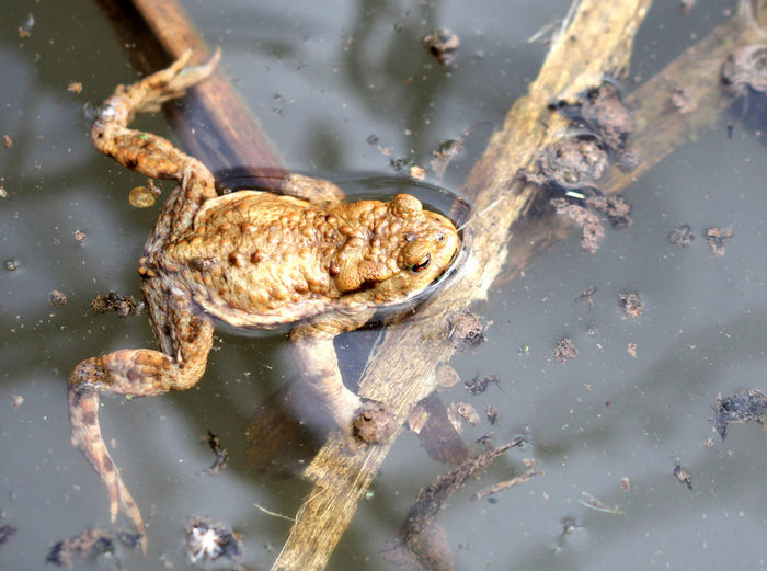 High angle view of frog in swamp
