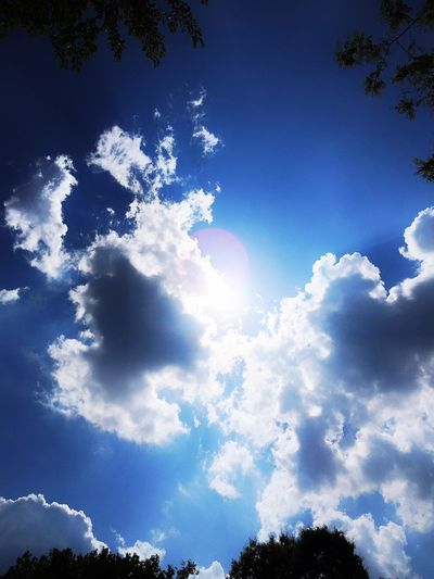Cigno Sky Blue Cloud - Sky Nature Low Angle View Beauty In Nature Backgrounds No People Outdoors Tranquility Sunlight Scenics Tree Sky Only Break The Mold