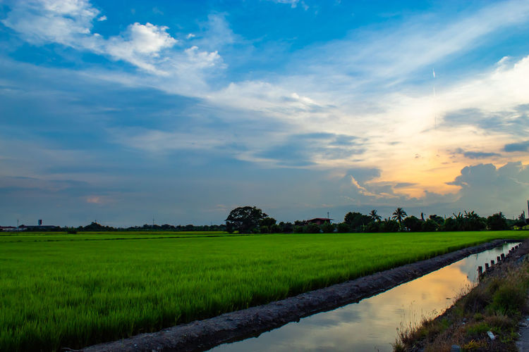 Light sunset behind the tree. Agriculture Beauty In Nature Cloud - Sky Environment Farm Field Grass Growth Land Landscape Nature No People Outdoors Plant Plantation Rural Scene Scenics - Nature Sky Tranquil Scene Tranquility Water