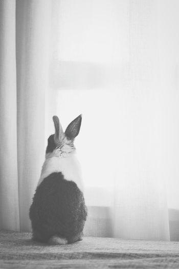 Rabbit sitting on window