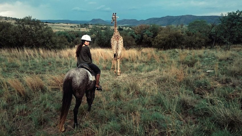 Horse Horseriding Giraffe Giraffe♥ Nature Veld Look Back Wildlife Safari Animals Animal Love Mobile Photography