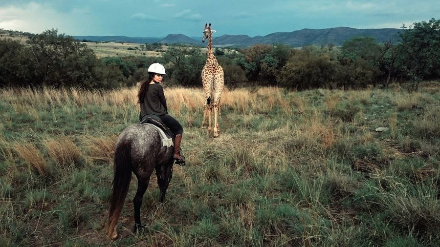 Woman Riding Horse In Field With Giraffe