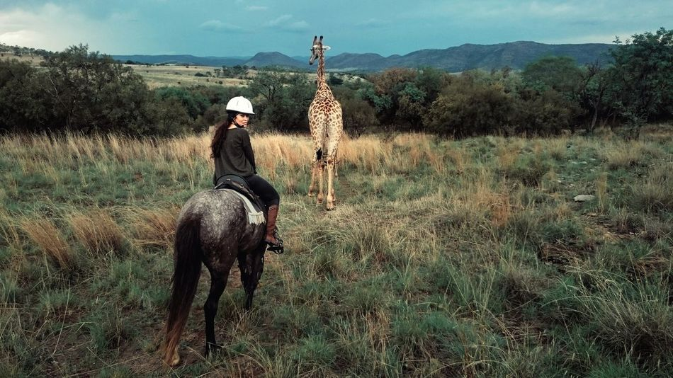 Horse Horseriding Giraffe Giraffe♥ Nature Veld Look Back Wildlife Safari Animals Animal Love Mobile Photography